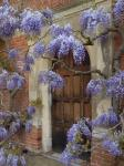 wysteria-over-old-door.jpg