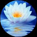 lotus_120x120_round_24